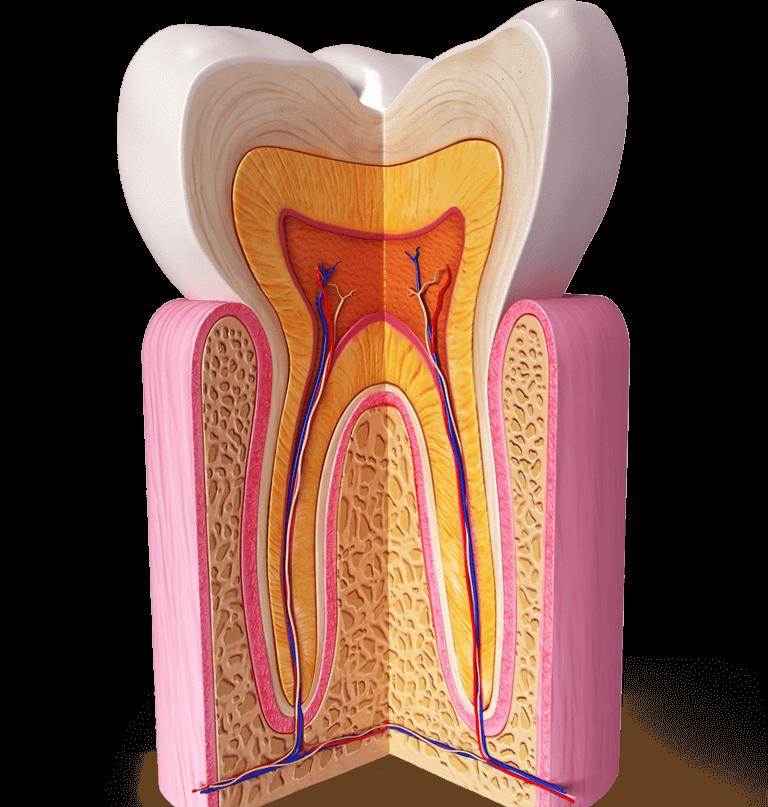 Wurzelkanalbehandlung (Endodontologie)